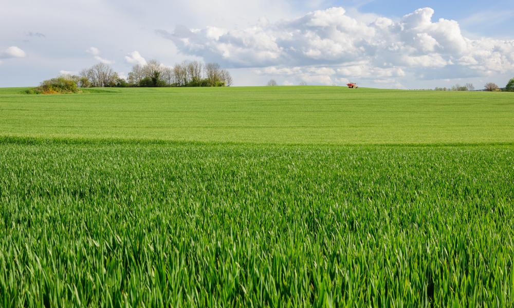 A green grass landscape