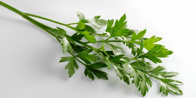 Talk of the Table // Parsley, Celery and Cilantro, Oh My!